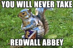 The full armor of God . on a squirrel! too cute/funny. Funny Animals, Cute Animals, Knight In Shining Armor, Knight Armor, Cat Armor, Cosplay Anime, Armor Of God, Crazy Outfits, Hamsters