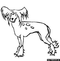 dog coloring pages realistic running - photo#38