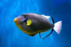 Trigger Fish | The Most Beautiful Fish In The World
