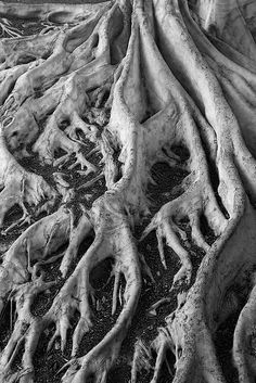 Black Texture Wild Nature - crawling tree roots - organic textures and natural surface pattern inspiration for design - BW Tree roots from a tree in Balboa park Natural Form Art, Natural Texture, Texture Photography, White Photography, Tree Photography, Pattern Photography, Patterns In Nature, Textures Patterns, Fractal Patterns
