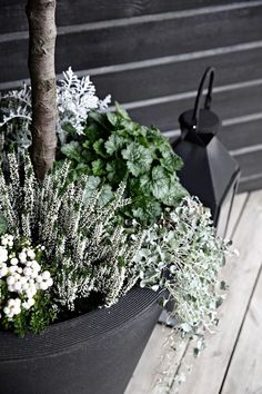Legend Our entrance is ready for fall - Dekoration Herbst - Flowers Fall Planters, Garden Planters, Container Flowers, Container Plants, Succulent Containers, Plant Design, Garden Design, Gemüseanbau In Kübeln, Container Gardening Vegetables