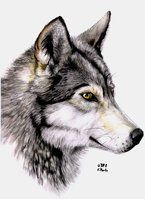 Watercolor wolf by ManiaAdun