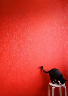 cat in red . . .
