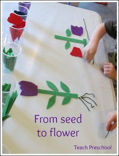 From seed to flower by Teach Preschool