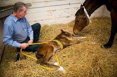 Madigan Foal Squeeze Procedure for Neonatal Maladjustment Syndrome. Newborn foals may offer clues to autism in humans Vet Clinics, Horse Ranch, All About Horses, Horse World, Horse Stables, Thoroughbred, Horseback Riding, Horse Stuff, Dog Stuff