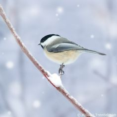 love that these are bird in your backyard. so pretty :)