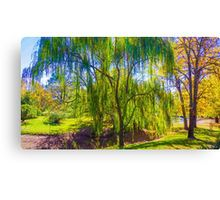 Weeping Gum Tree in Autumn at Malmsbury Canvas Print