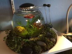 A Beautiful Way to Change Your Betta's Water