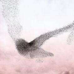 The world belongs to those who can see beauty.  Experience the moment. #SEETHEUNSEEN  www.swarovskioptik.com #swarovskioptik #birdwatching #birds #birdlovers #naturelovers #birding #biodiversity #birdinginthewild #ornithology #birdinglife #birders #discovernature #natuer #beautifulnature #flock #birdmigration Bird Migration, Birdwatching, Flocking, Swarovski, Birds, In This Moment, Artists, World, Nature
