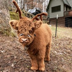 65 Baby Animals That Can Fill Your Heart With Joy - - Tiere - Itens para Cães Cute Baby Cow, Baby Cows, Cute Cows, Baby Farm Animals, Baby Donkey, Cute Little Animals, Cute Funny Animals, Fluffy Cows, Fluffy Animals