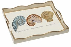Nautilus and Scallop Tray