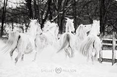 I'm getting so excited for snow! Not so much for the cold coming with it but I'm ready to get out and photograph some fuzzy horses in the fluffy white stuff.  - Photo by Shelley Paulson