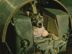 En la fotografía a color (increíble avance para la época) vemos a la perrita tiempo antes de enviarla al espacio. Con esto se comprobó la ausencia de oxígeno en el espacio exterior. La primera cosmonauta de nuestro planeta, Laika, se convirtió en una heroína y el primer ser vivo en salir del planeta Tierra.