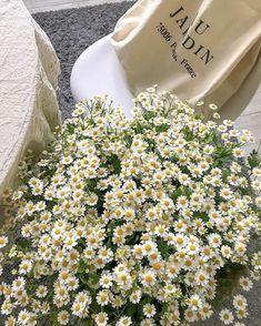 📸: on ig Beige Aesthetic, Flower Aesthetic, Summer Aesthetic, Aesthetic Photo, Aesthetic Pictures, My Flower, Planting Flowers, Beautiful Flowers, Daisy
