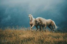 Horses at play, love and affection