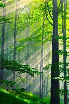 Summer Forest, Bulgaria