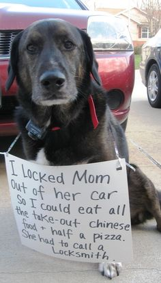 28 Dogs That Definitely Arent Mans Best Friend - Funny Dog Quotes - The 27 Naughtiest Dogs In The World (Hilarious Dog Shaming Gallery The post 28 Dogs That Definitely Arent Mans Best Friend appeared first on Gag Dad. Funny Animal Pictures, Funny Animals, Cute Animals, Hilarious Pictures, Funniest Pictures, Animal Fun, Colorful Animals, Animals Dog, Wild Animals