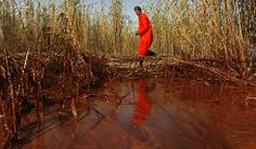 Greenpeace senior campaigner Lindsey Allen takes water samples along a 20-yard area of marsh where oil is thick in concentration near the south pass of the Mississippi River. (Carolyn Cole / Los Angeles Times / May 18, 2010)