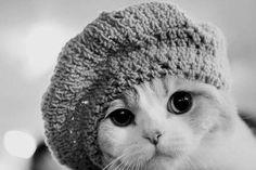 fashionable kitty
