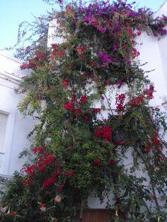 Tarifa, Andalusia