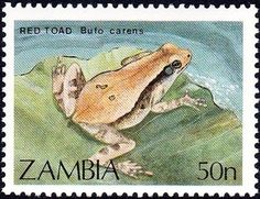 Stamp: African Red Toad (Bufo carens) (Zambia) (Frogs and Toads) Mi:ZM 470,Yt:ZM 457,Sg:ZM 567