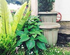 Gardening Flowers how to upcycle cheap flower pots, container gardening, crafts, gardening, Photo via The Palette