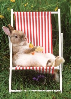 Hi I am just sitting here in my lounge chair eating my carrot.