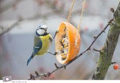 MrsBerry.de DIY | Vogelfutter oder Meisenknödel selber machen | Meisen beim Futter picken