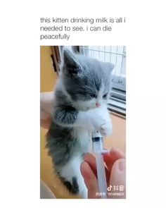 New cats cute smile kittens Ideas Cute Funny Animals, Cute Baby Animals, Animals And Pets, Funny Cats, Cute Kittens, Cats And Kittens, I Love Cats, Crazy Cats, Cute Family
