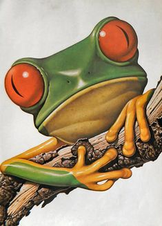 A rich, vibrant public domain print of a tree frog