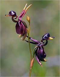 Картинки по запросу Самые красивые цветы необычные