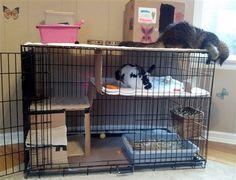 Dog crate rabbit home - BinkyBunny.com - House Rabbit Information Forum - BinkyBunny.com - BINKYBUNNY FORUMS - HABITATS AND TOYS
