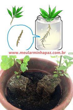 Plants, Yuri, Vertical Vegetable Gardens, Small Vegetable Gardens, Growing Mint, Herb Garden Pallet, Vegetable Garden Tips, Planting Roses, Tomato Plants