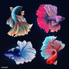 Beautiful betta fish collection design resource | premium image by rawpixel.com / Te Aggressive Animals, Fish Art, Animals Of The World, Free Illustrations, Betta Fish, Tropical Fish, Royalty Free Photos, Wallpaper Backgrounds, Drawings