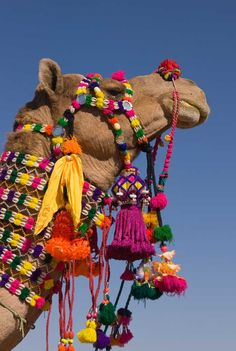 Decorated-Camel (by Jeremy Richards)