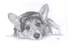 CORGI dog Limited Edition art drawing print by ArcadiaPortraits