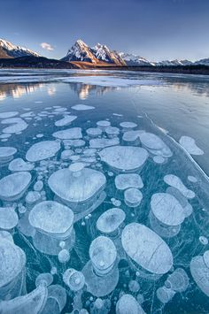 Ice Bubbles in Abraham Lake, Kootenay Plains, Bighorn Wildlands, Alberta, Canada by Fikret Onal, via 500px