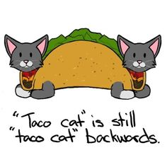 Taco Cat Spelled Backwards Is Tacocat I Mean Taco Search Pictures ...