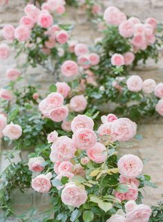 Pink Garden Wedding in Provence Pink Garden, Dream Garden, Pretty Flowers, Pretty In Pink, Pink Flowers, Exotic Flowers, Yellow Roses, Color Rosa, Flower Wallpaper