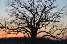 Gettysburg, PA Sunset Tree as seen from Devil's Den