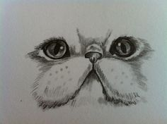 persian cat draw - Google zoeken