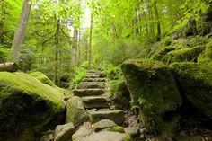 A Florest Negra parece o cenário de um dos contos de fadas dos Irmãos Grimm. Imagem por chbaum / Shutterstock