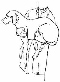 How to Give First Aid to Your Dog!   27 life-saving how-to's.