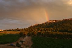 Rainbow in the vines