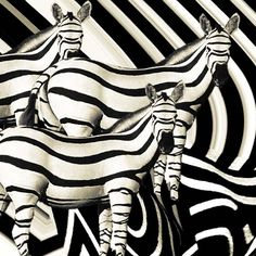 Not the typical zebra pattern. ❣Julianne McPeters❣ no pin limits