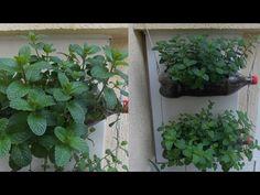 Como Plantar Hortelã, Horta Vertical em Garrafas Pet - YouTube