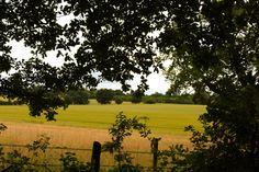 Binfield Village walks