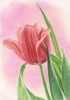 """Пошаговый мастер-класс рисования тюльпана пастелью ― """"АРТ-КАРАНДАШ"""" - магазин для творческих людей"""