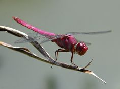 My love of dragonflies began when I was a very young. they are beautiful are represent new life
