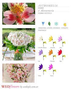 astromelia_arreglos_florales_temporada_verano_argentina_wedflowers_flores_para_tu_casamiento